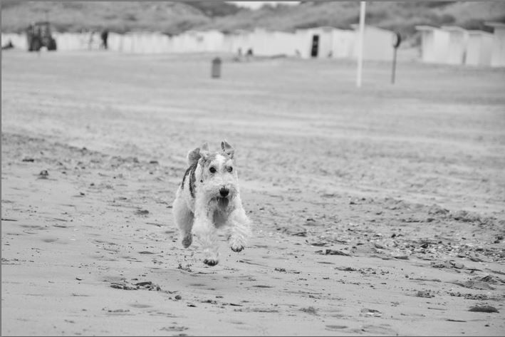 A Farewell to Bones - Polly left our Beach († 2015) (Foto: Munich Grief Bloggers)