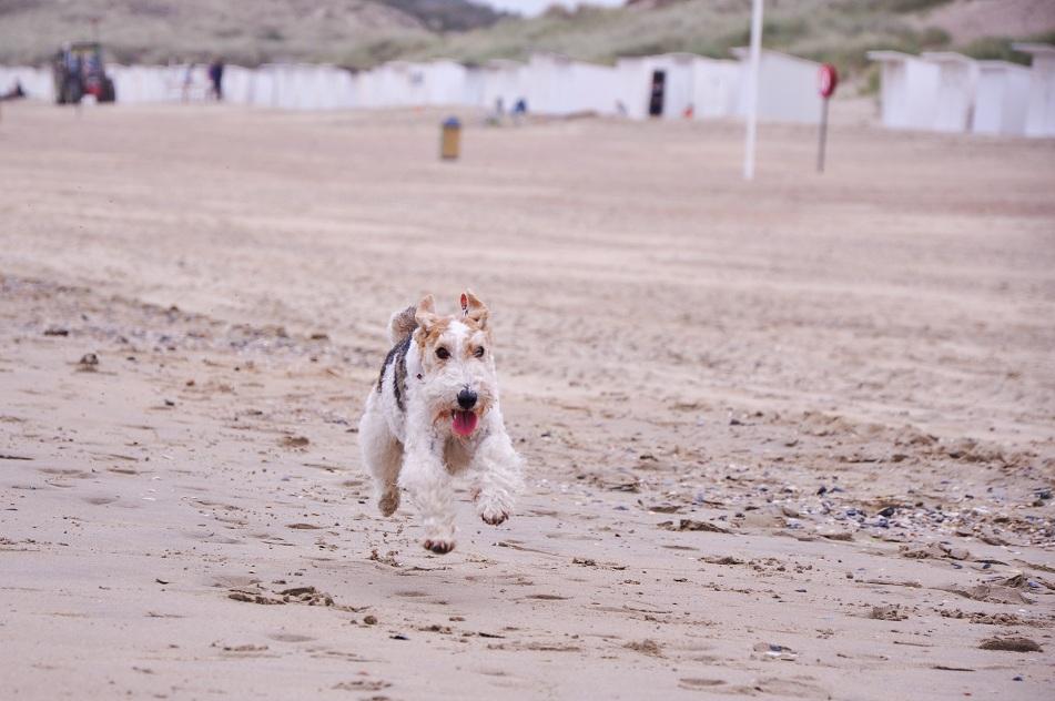 Wag the Beach: Bredene - Las Vegas für Hunde (Foto: Munich Globe Bloggers)